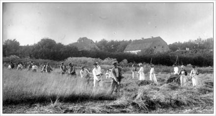 Slåtter i Eke cirka 1910, foto Carl Hansson