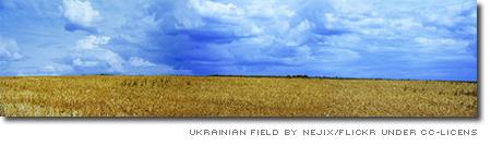 Ukrainsk vetefält
