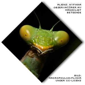 bild på insekt som ser ut som en alien